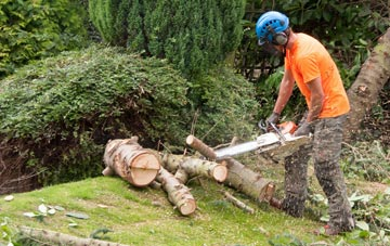 additional services offered by Stockton tree surgeons