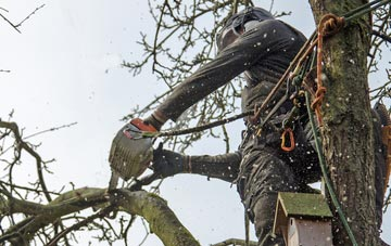 the process of removing dead wood from Stockton trees