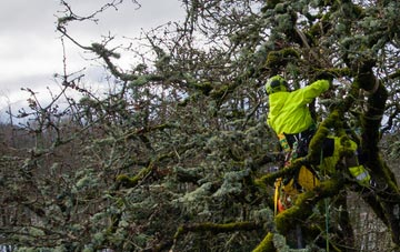 experienced Stockton arborists are needed
