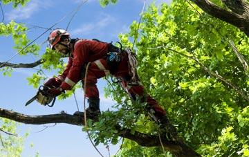 find trusted rated Stockton tree surgeons