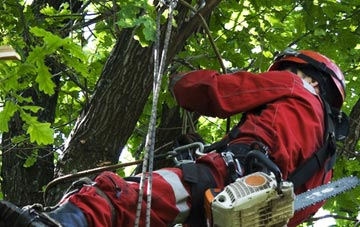 hiring professional Stockton tree surgeons