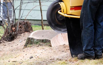 rated Stockton tree stump removal companies