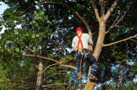 Stockton tree crown reduction services