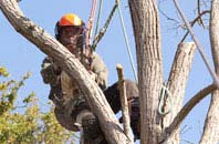 Stockton tree dead wooding services